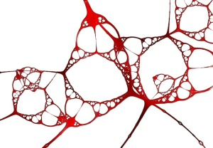 Gehirn_Struktur
