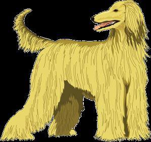 Hund Afghane in Hummer Blog