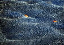 Regenkreise auf Wasser