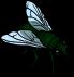 fliege-kunstlicht